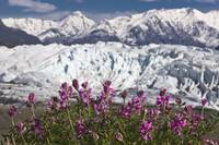 Scenic view of Matanuska Glacier and Chugach Mount
