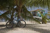Bike Against Palm Tree On Beach, Belizesan Pedro,
