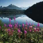 """Auke Lake On A Clear Day With Fireweed In The Fore"" by DesignPics"