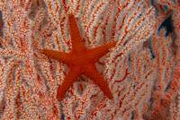 Thailand, Sea Star