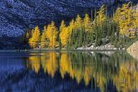 Autumn, Alpine Larch Trees, Lake Agnes, Banff Nati