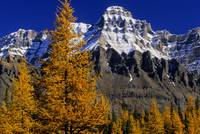 Alpine Larches And Mount Huber, British Columbia,