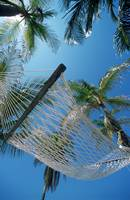 Hammock And Palm Tree, Great Barrier Reef, Norther