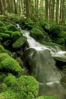 Sol Duc Watershed, Olympic National Park, Washingt