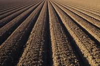 California, Field Of Plowed Soil Ready For Plantin