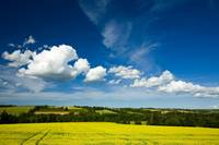 Cumulus Clouds Over Canola Field In Bloom, Prince