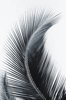 Palm frond curved upward towards sky