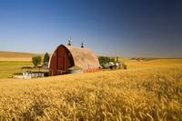 Sunset Barn And Wheat Field, Steptoe Butte, Washin
