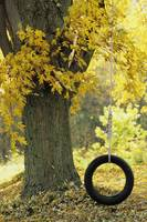 Tree With Tire Swing, Quebec City, Quebec, Canada