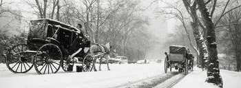 Central Park In Falling Snow New York City, New Y