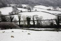 Derwent Valley, Derbyshire, England, Sheep Grazing