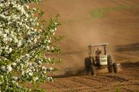 Apple Blossoms And Farmer On Tractor, Prince Edwar