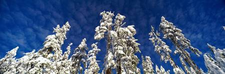 Scenic, Winter, Grouse Mountain, North Vancouver,