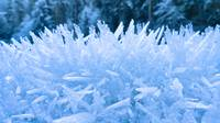 Close up of hoar frost along the North Fork of the