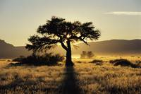 Sun Coming Up Behind A Tree In African Grasslands
