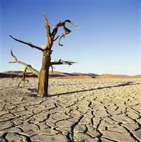 Dead Tree In Cracked Earth In Desert Namibia, Afr