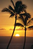 Two Palm Trees Silhouetted At Sunset With Fiery Or