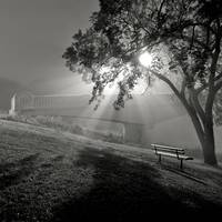 Foggy Morning And Assiniboine Park Footbridge, Win