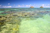 Hawaii, Oahu, Lanikai, Mokulua Islands, Coral Head