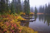 Reflection On Lake In Autumn, Mount Rainier Nation