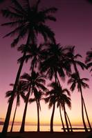 Hawaii, Oahu, Dramatic Purple Sunset Through Silho