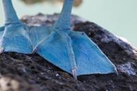 Ecuador, Galapagos Islands, The feet of a blue foo