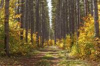 Path Into The Forest In Autumn Sault St. Marie, O