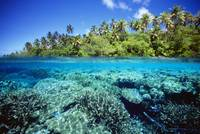 Micronesia, Pohnpei Over/Under View Of Coral Reef,