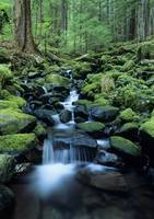 Washington, Olympic National Park, Stream Waters F