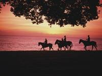 Riding Horses On The Beach At Sunset