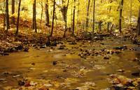 Stream In Autumn, New England, USA