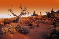Dead Tree In Desert Monument Valley, United States