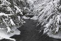 A Creek Running Between Snow-Covered Trees, Quebec