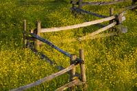 Wildflowers And A Wooden Fence At Sunset Fulford,