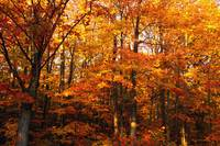 A Vibrant Forest In The Fall