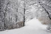 A Path Lined With Trees And Covered In Snow Quebe