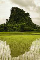 A Rice Field In Asia