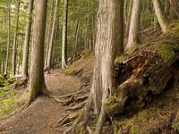 Forest Pathway, Whistler, British Columbia