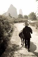 Man Walking Down Road With Water Buffalo