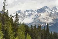 A Forest And The Rocky Mountains Jasper, Alberta,