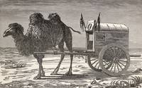 A Camel Pulling A Carriage Across The Gobi Desert,