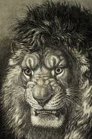 The Lion, King Of Beasts. From El Mundo Ilustrado,