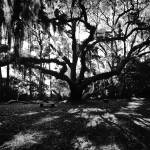 """Live Oak and Benches"" by jasonleslierogers"