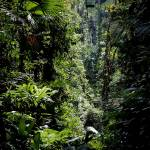 """Tropical Rainforest Costa Rica IMG_0058"" by rayjacque"