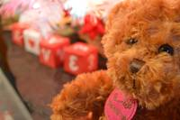 Teddy's Of Love