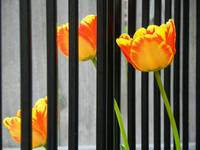 Stop By The Fence To Enjoy Spring