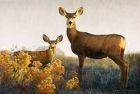 doe deer with fawn sunset
