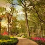 """Azalea Garden"" by JessicaJenney"