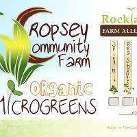 Microgreen Label Art Prints & Posters by Mary L. Dolan