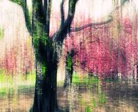 Weeping Cherry Impressions